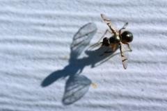bpg-insect-and-shadow-1a2e14864ce02d7caf25edca9f15b58d4e260f50