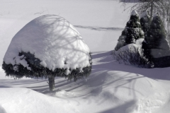 bpg-winters-topping-dca7471f5ff50aac33d5eb0bd6301e4076d3b379