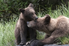 Grizzly Cub & Mom