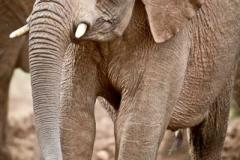 baby-elephant-93eae29beffb1c2bb8b6f8a6eb251c0224133861