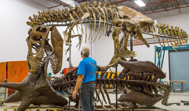 Photograph Dinosaurs and Whales in Trenton